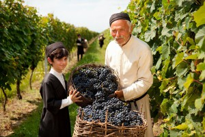 Wine Tourism Workshop & Veneto Fam Trip for Tour Operators gets a Bravo! | International Wine Tourism Conference